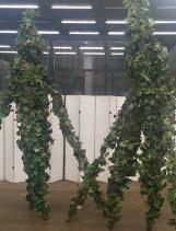 living vines 2